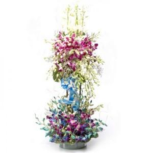 Orchids are elegant