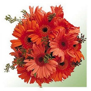 A bouquet of Orange Gerberas