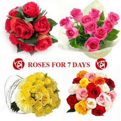 different colors of roses