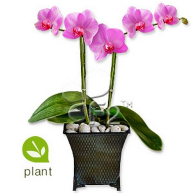 colored orchid plant